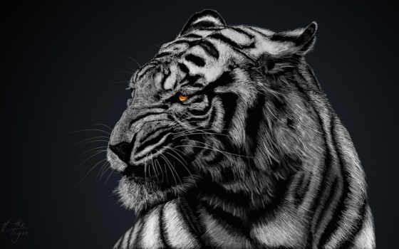 тигр, white, desktop
