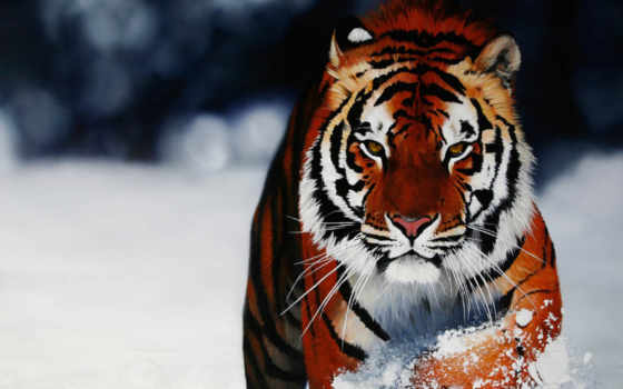 tiger, igre