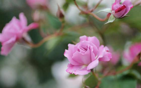 Цветы 25428