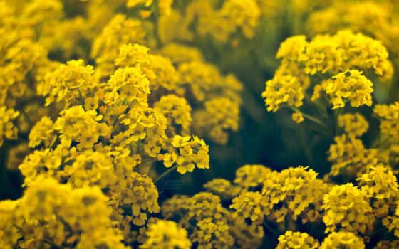 цветы, желтые Фон № 25490 разрешение 1920x1200