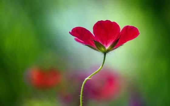 widescreen, цветы, широкоэкранные