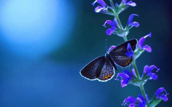 бабочка, разрешениях, разных