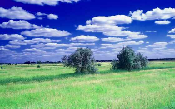 summer, desktop, природа, preview, best, трава, фон,