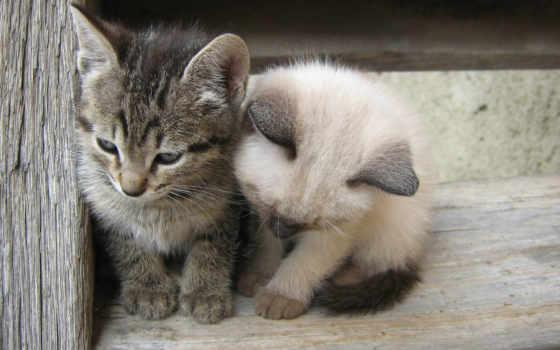 zhivotnye, вместе, кошки, теплее, картинка, котята, прикольные, навсегда,