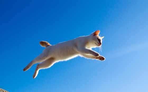 кот, прыжок, картинка, полет, кошки,