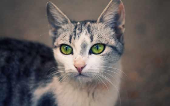 кот, кошки, cats, свет, ус, шерсть, лес, симптомы, дерево, feeder,