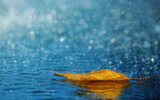 дождь, капли, лист, осень, water, ipad, дождя,