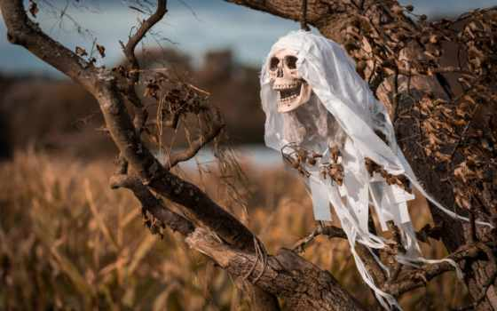 tapety, поле, art, книги, ужас, черепа, череп, pulpit, creepy,