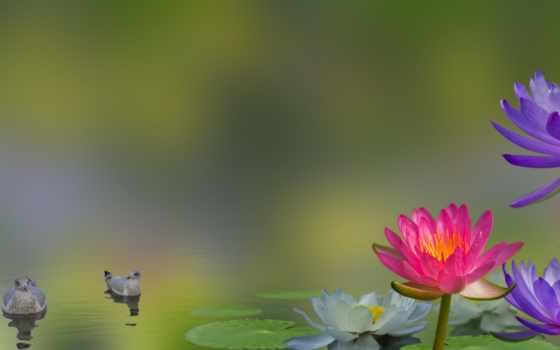 you, день, добавить, didn, god, поскольку, другой, фотоколлаж, птицы, cvety,