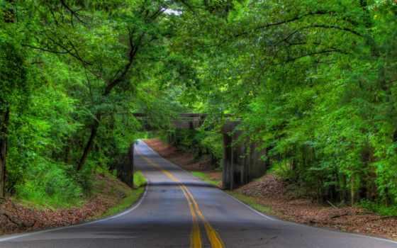 лес, путь, desktop, sun, images,