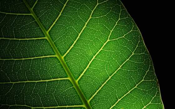 naturaleza, frase, fallar, растение, усилитель, качество, quedate, cerca, zen, makryi