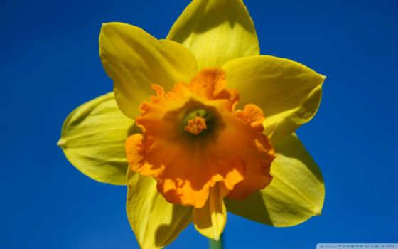 весна, sunny, iphone
