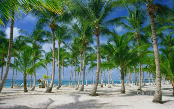 бока, chica, доминикана, пляжи, отдых, дней, туры, доминикане, туристическая, punta,