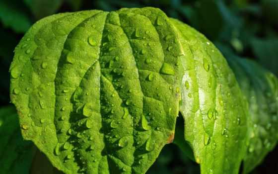 free, leaf, desktop