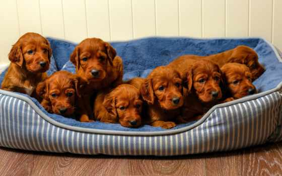 чему, щенок, abbigliamento, сне, взгляд, снится, сонник, собака,