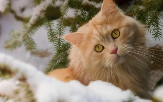 new, год, кот, кошек, кошки, заставки, взрослая, котами, руслан, уже,