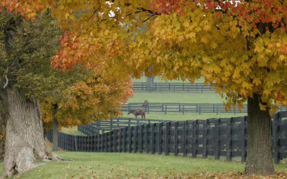 лошадиная, ферма