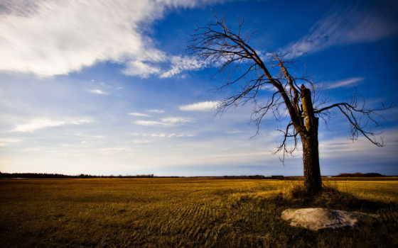 дерево, одинокое, старое, стволы, широкоформатные, закат, деревьев, природа, house, осеннее,
