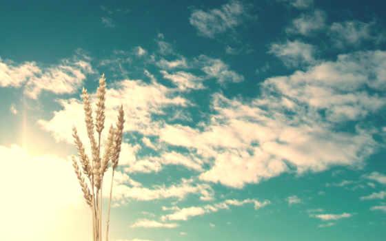 небо, oblaka, колосья,