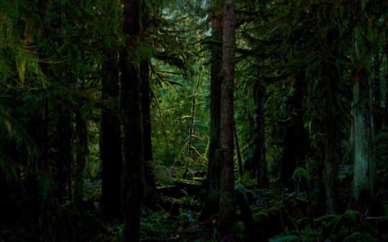лес, лесная, чаща, dark, мох, trees, заставки, фоны, лесу, природа,