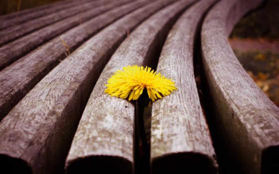 yellow, сладкое, цветы, весна, одуванчик, wood, бабочка,