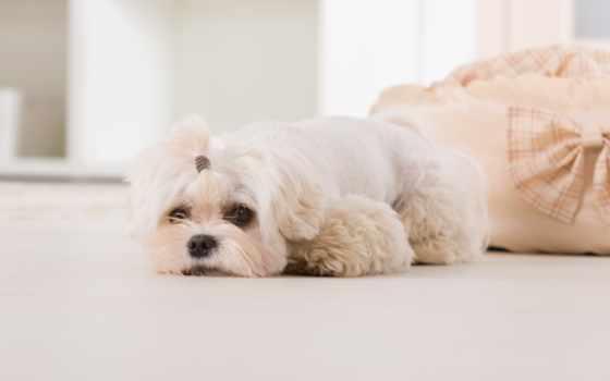 собак, images, фотообои, stock, кастрация, ветеринара, стену, living, world, отъезд, стерилизация,