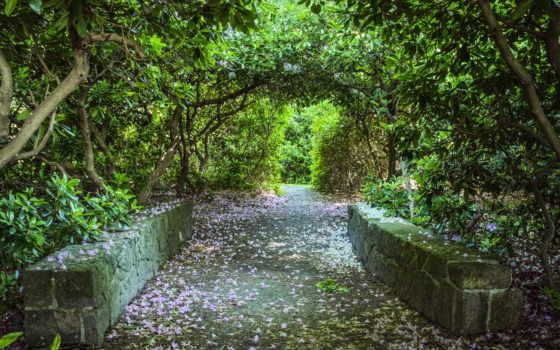 природа, крымский, аллея, lessad, trees, лес, ковёр, цветов,