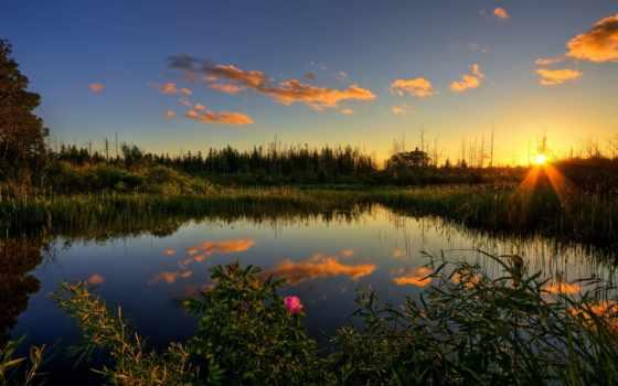 красивые, природа, финляндия, камыш, лес, пруд,