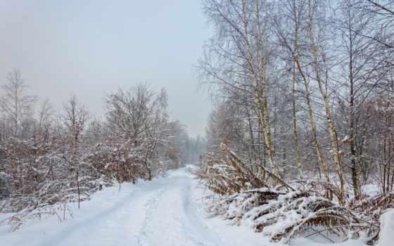 del, paisaje, invierno, rboles, bosque, fondos, naturaleza, descargar, pantalla, gratis,