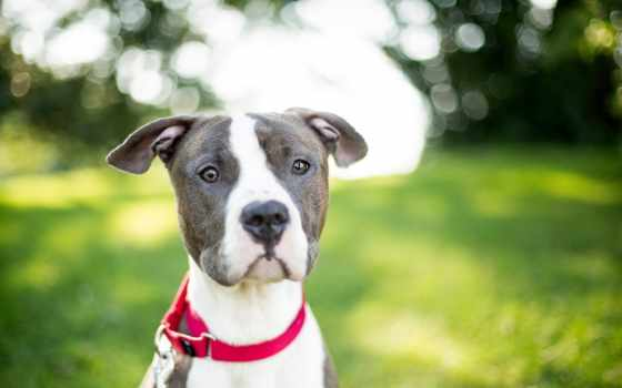 фото, картинка, других, собаки, собак, теме, suki, клички, имена, кобели,