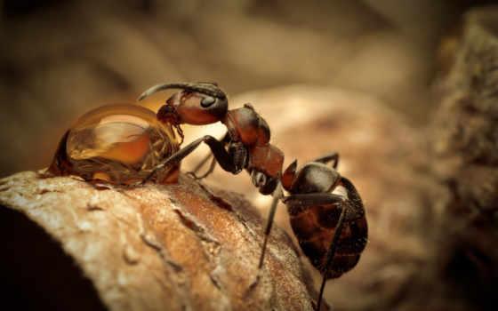 муравьи, ant, они, едят, макро, яndex, pet, муравьев, точно, card, живут,