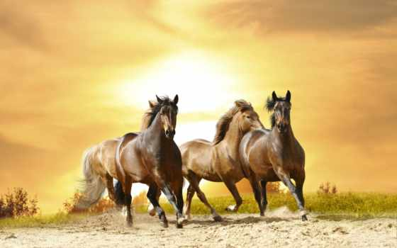лошади, фотообоев, интерьера