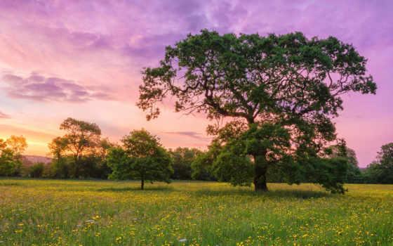 природа, телефон, поле