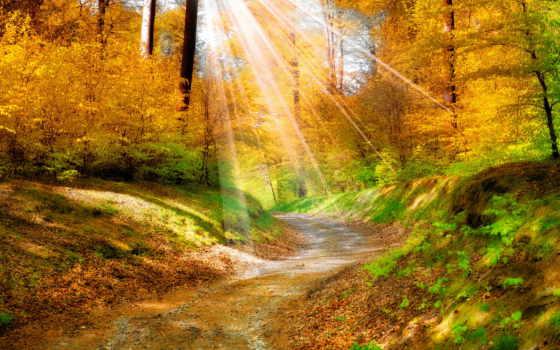 природа, осень, лес, красиво, красивые, страница, листва, rays, разделе, possible,