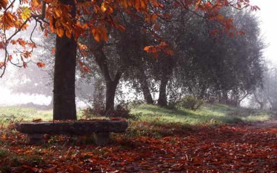 park, осень, природа, скамейка, которых, есть, всех, тег, листва, опавшие,