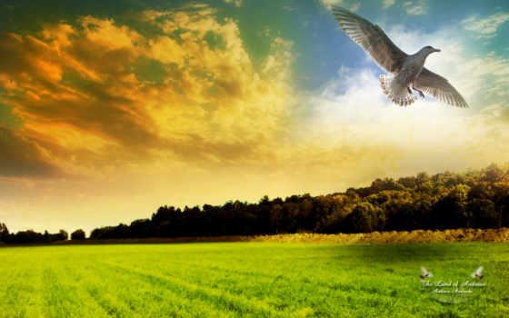 природа, поле, птица, birds, разных, freedom, птицы,