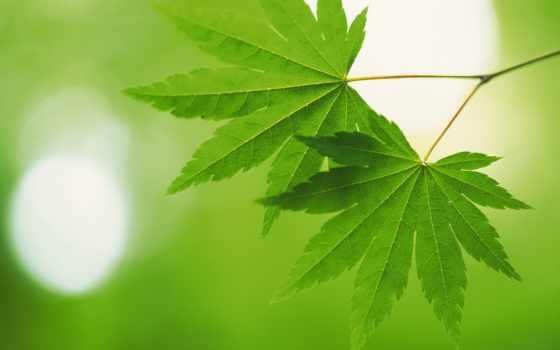 листва, растение, оптом, sale, склад, salova, петербург, санкт, product, ul, hoz