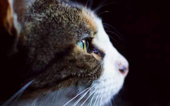 кошка, бело, profil