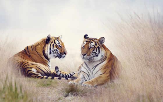 тигр, watercolor, создать, изображение, модульные, картины, код, тигра, кошки, картину,