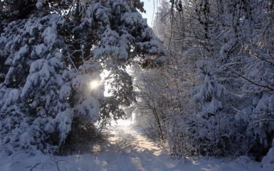 winter, снег, rays, sveta, trees, time, года, пейзажи -, favourite, природа, дороги,