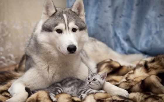 друзья, кот, собака, кошки, собаки, могут,