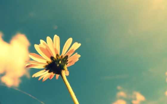 ретро, free, this, цветы, desktop, изображение,