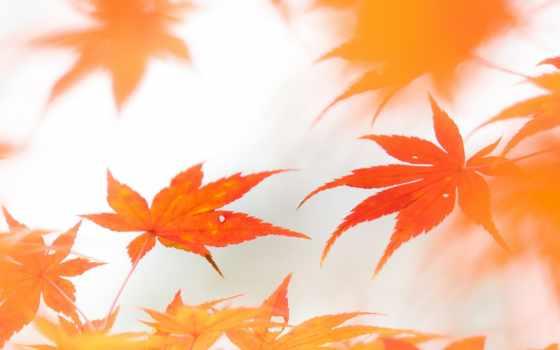 листья,