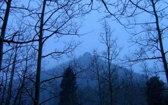 хмурый, лес, gothic, castle,
