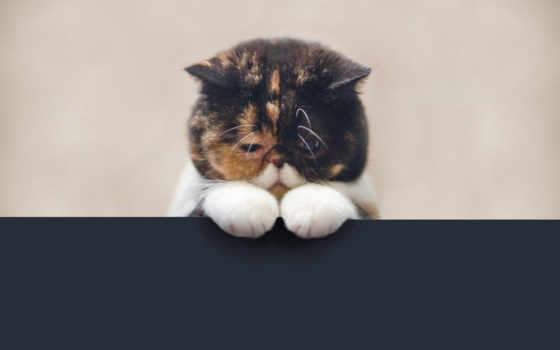 кот, обиженный, кота