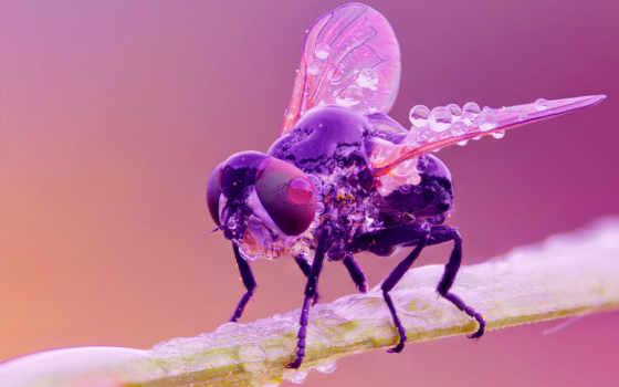 насекомые, двукрылые, you, parede, insects, flies,