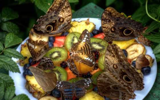 toad, true, семья