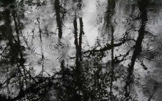 wallpaper, лужа, деревья,дождь