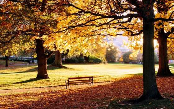 осень, скамейка