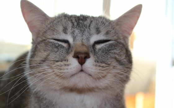 кот, happy, zhivotnye